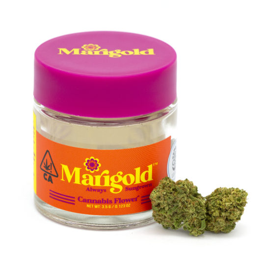 Marigold Blue Dream Jar and Flowers