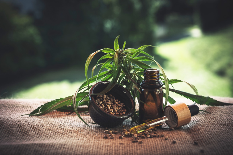 cbd oil with plant