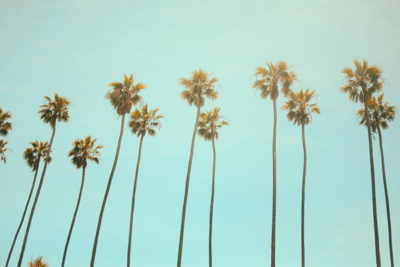 Palm Trees (by Julian Myles)
